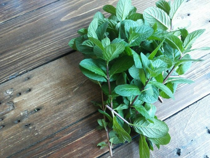 menta, erbe officinali