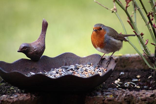 uccellini_becchime